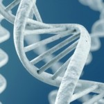 HSP Research: Recent Genetic Findings