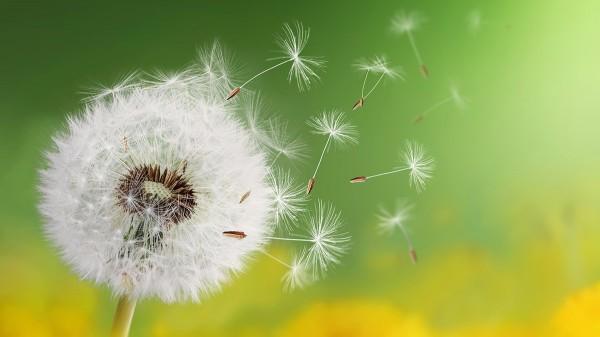 Soffione nel vento - Intervista a Nicoletta Travaini su Psicologia Contemporanea